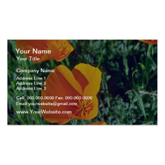 California Poppies Closeup flowers Business Card Templates