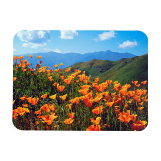 California poppies covering a hillside magnet