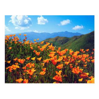 California poppies covering a hillside postcard