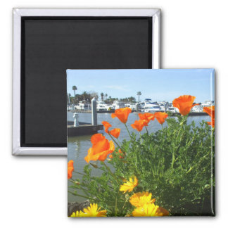California poppies refrigerator magnets