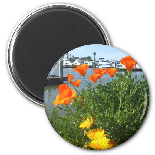 California poppies magnets