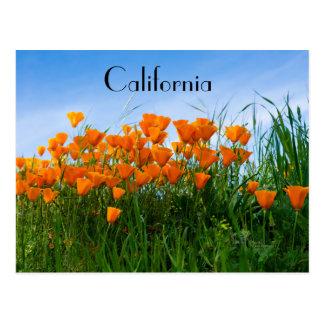 California Poppies postcard