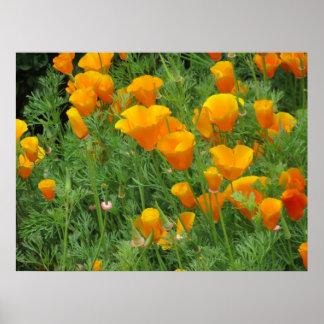California Poppies Print