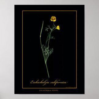 California Poppy Botanical Art Print