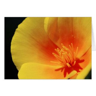 California Poppy Card