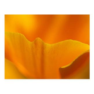 California Poppy Close-Up... Postcard