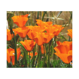 California Poppy Flowers Gallery Wrap Canvas