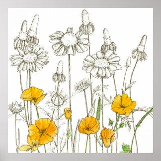 California Poppy Flowers Wildflower Drawing Poster