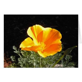 California Poppy in Bloom Card