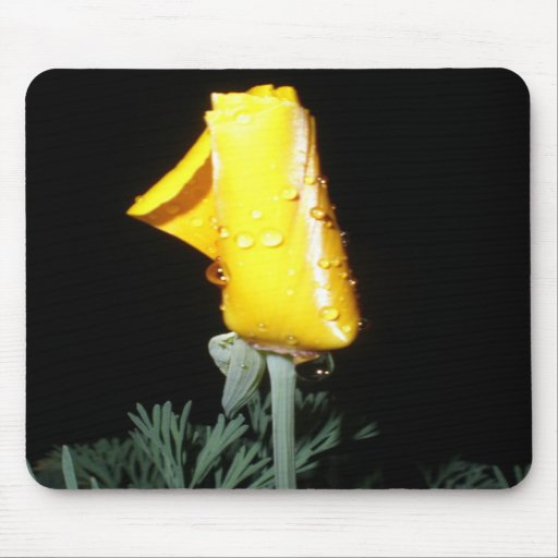 California Poppy with Water Drops Mousepads