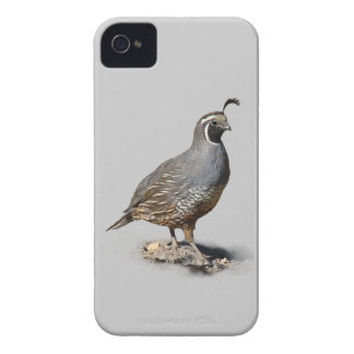CALIFORNIA QUAIL iPhone 4 Case-Mate CASE