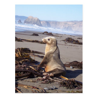 California Red Seal Postcard