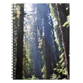 California Redwoods Notebooks