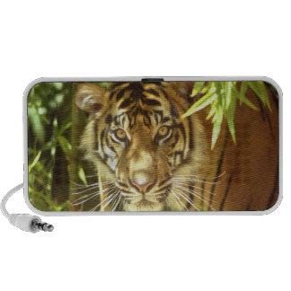 California, San Francisco Zoo, Sumatran Tiger Mp3 Speaker
