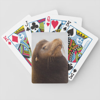 California Sea Lion Bicycle Playing Cards