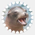 California Sea Lion Stickers