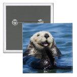 California Sea Otter Enhydra lutris) grooms Pinback Button
