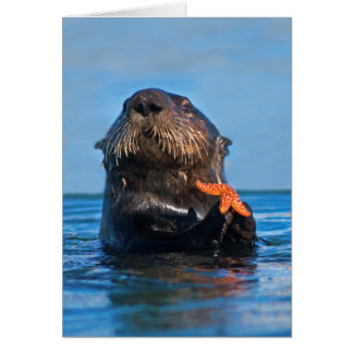 California Sea Otter Holding Starfish Card