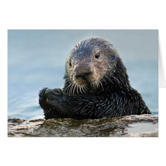 California Sea Otter Playing with Stone Card