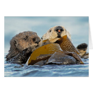 California Sea Otters at Morro Bay Card