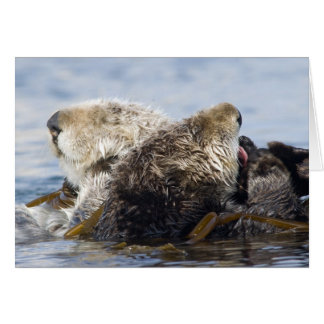 California Sea Otters Card