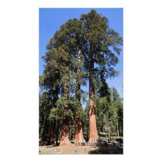 California Sequoia National Park Print Photo