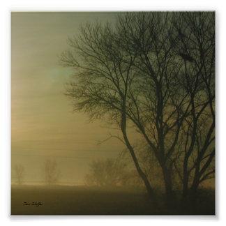California Sunrise Tree Silhouette Photograph