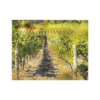 California Wine Vineyard Canvas Print