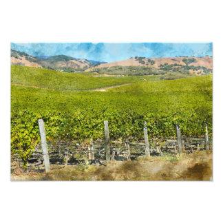 California Wine Vineyard Photo Print