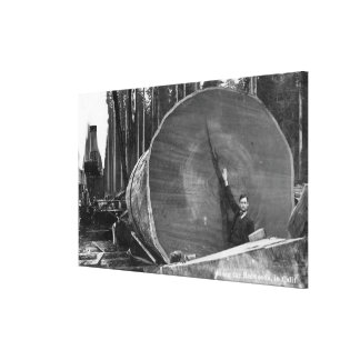 CaliforniaMan Posing by Cut Redwood Log Stretched Canvas Prints