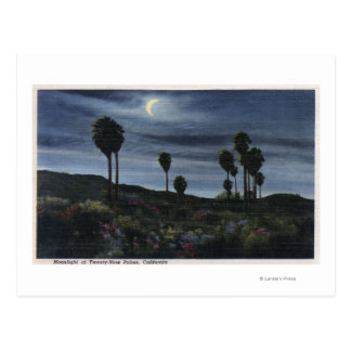 CaliforniaMoonlit View at Twenty-Nine Palms Postcard