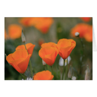 Californian poppies card
