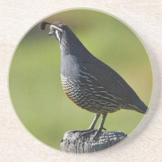Californian quail coaster