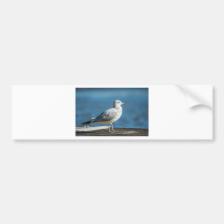 Call me M.Seagull Bumper Sticker