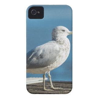 Call me M.Seagull Case-Mate iPhone 4 Case
