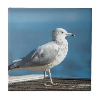 Call me M.Seagull Ceramic Tile