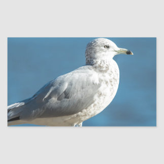 Call me M.Seagull Rectangular Sticker