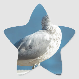 Call me M.Seagull Star Sticker