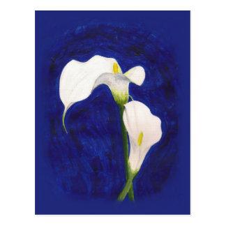 calla lilies post card