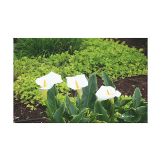 Calla Lillies Maui Canvas Print
