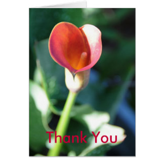 Calla Lilly, Thank You Card