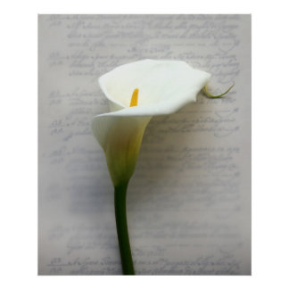 calla lily on old handwriting huge poster