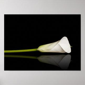 Calla lily print