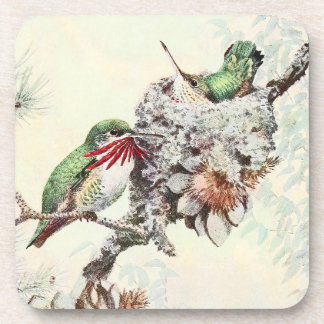Calliope Hummingbird Birds Wildlife Nest Coaster