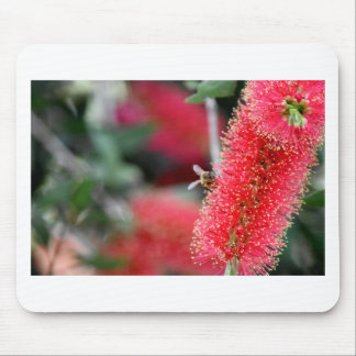 CALLISTEMON BOTTLE BRUSH FLOWER & BEE AUSTRALIA MOUSE PAD