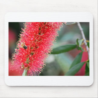 CALLISTEMON RED BOTTLE BRUSH FLOWER AUSTRALIA MOUSE PAD