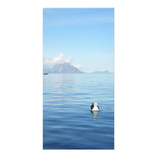Calm blue sea with bird in Lofoten, Norway card Customised Photo Card
