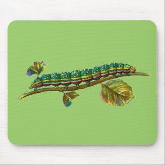 Calocampa vetusta caterpillar mouse pad