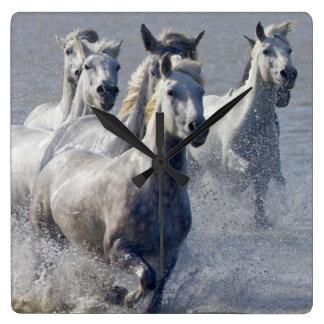 Camargue horses running on marshland to cross wall clocks