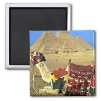 Camel and pyramids, Cairo, Egypt Magnet